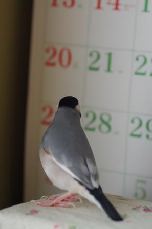 カレンダーとゴマ (2)