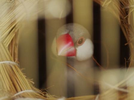 巣材で首飾り