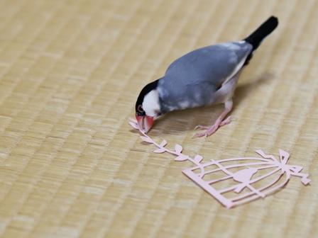 未 鳥かごの切り紙とごま (7)