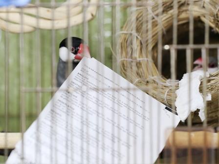 でっかい巣材 (3)