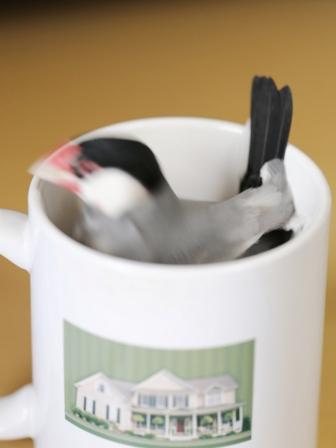 未 ごま マグカップ (4)