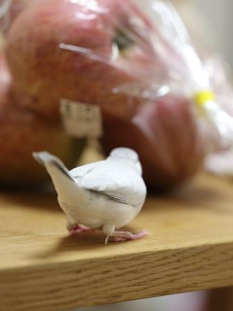 未 セサミ りんご フルーツ 台所 (3)