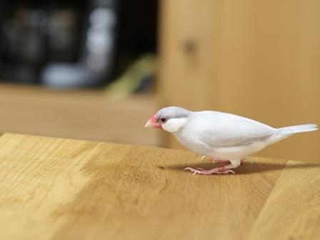 未 セサミ 台所 テーブル (2)