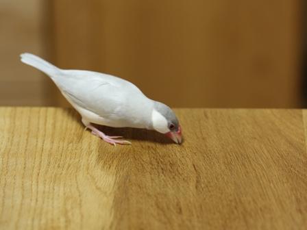未 セサミ 台所 テーブル (4)