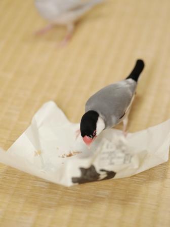 未  ごま お菓子 包紙 残り ゴミ  (3)