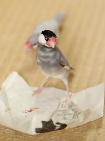 未  ごま お菓子 包紙 残り ゴミ  (5)