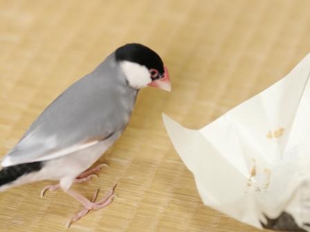 未  ごま お菓子 包紙 残り ゴミ  (6)