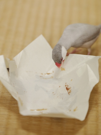 未 セサミ お菓子 包紙 ゴミ  (7)