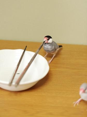 済 ごま セサミ 箸 皿 (5)