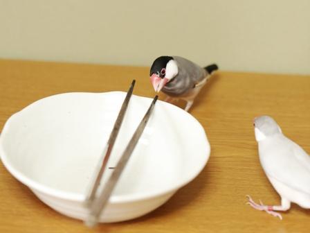 済 ごま セサミ 箸 皿 (3)