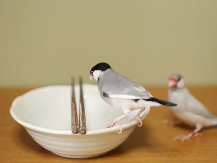 済  ごま セサミ 箸 皿 (15)