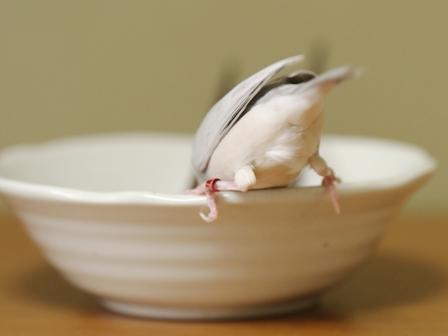 未 セサミ 箸 皿 (3)