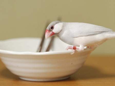 未 セサミ 箸 皿 (4)