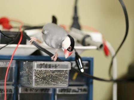 未 ごま エンジニア 修理 部品 電気 (2)