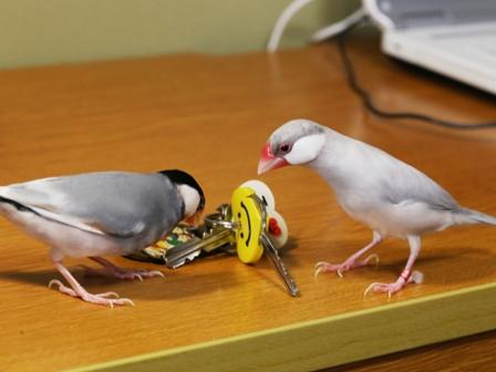 未 ごま セサミ 鍵 キー 机 (1)