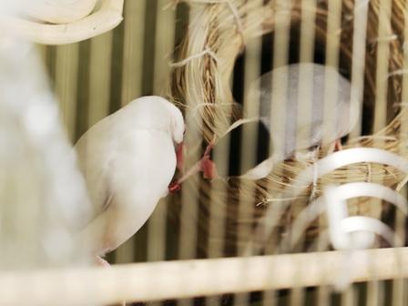 未 ごま セサミ 巣 足 破壊 (2)