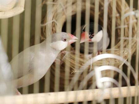 未 ごま セサミ 巣 足 破壊 (3)