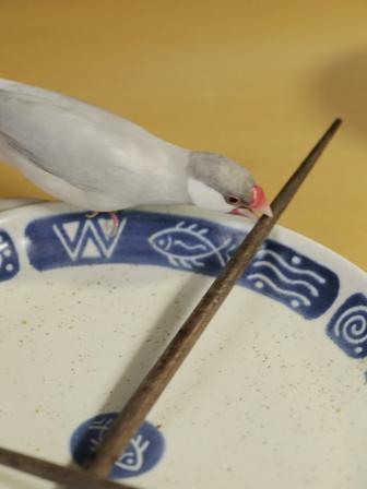 未 セサミ 箸 皿 パクッ  (4)