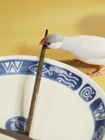 未 セサミ 箸 皿 パクッ  (8)
