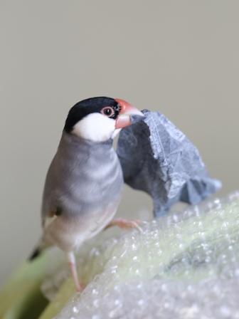 未 ごま あぶらとり紙 巣材 (1)