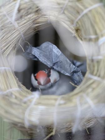 未 ごま あぶらとり紙 巣材 (8)