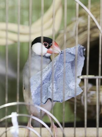未 ごま セサミ 巣 あぶらとり紙 巣材 (7)