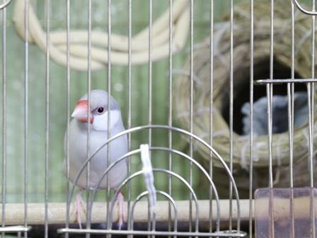 未 ごま セサミ 巣 あぶらとり紙 巣材 (8)