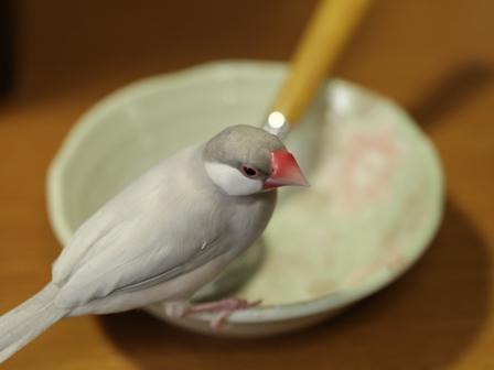 未 セサミ 皿 スプーン ヨーグルト (11)