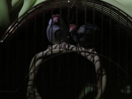 未 夜 ベッド ごま セサミ (3)