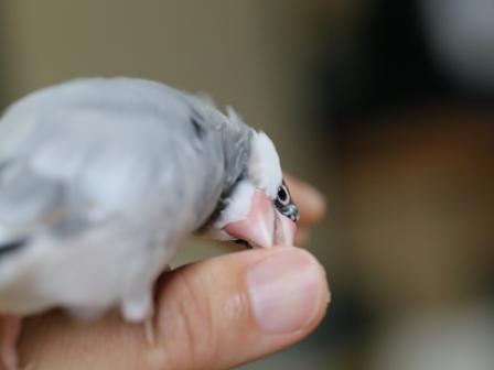 未 ごま 換羽 白髪 頭 イライラ キュルキュル (11)
