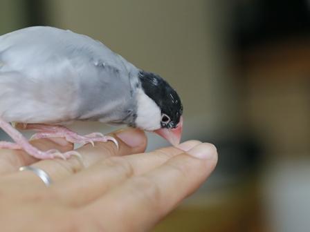 未 ごま 換羽 白髪 頭 イライラ キュルキュル (13)