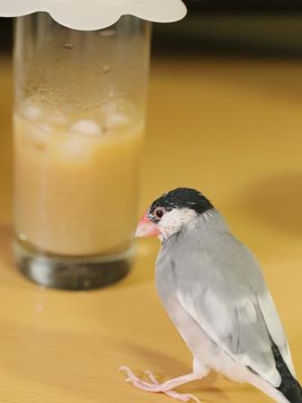 済 ごま アイスコーヒー 蓋 グラス (9)
