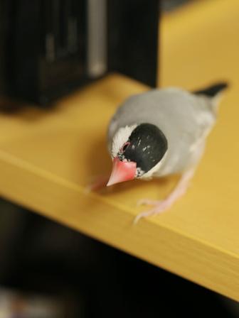 未 ごま パソコン 好奇心  (5)