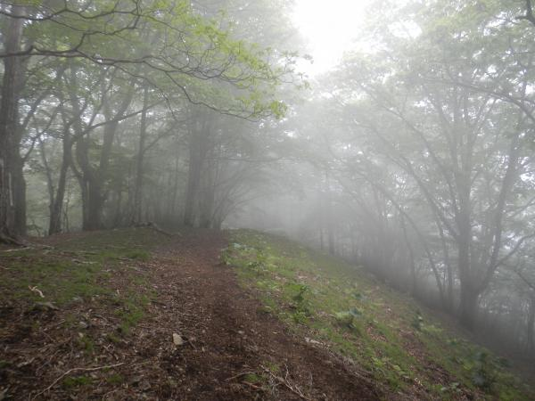 鷹ノ巣山 061