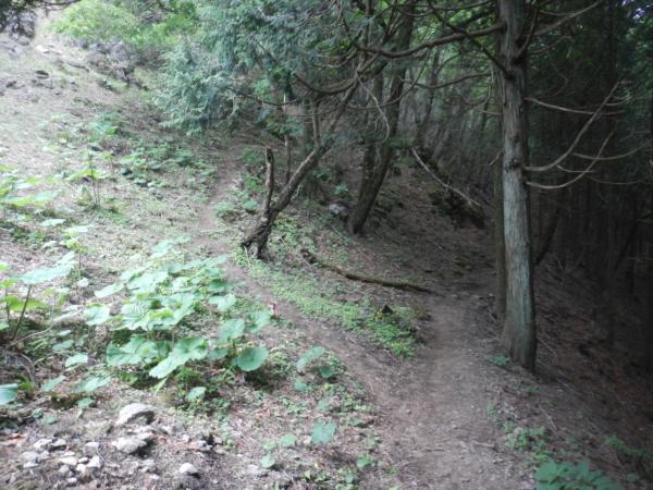 鷹ノ巣山 094