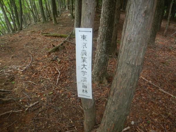 鷹ノ巣山 096