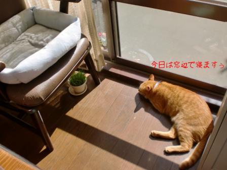 窓辺でお昼寝です
