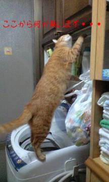 洗濯機の棚もにおう