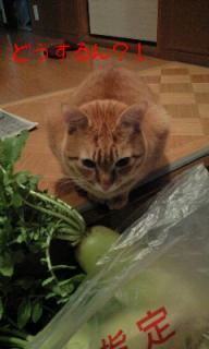 途方に暮れる猫