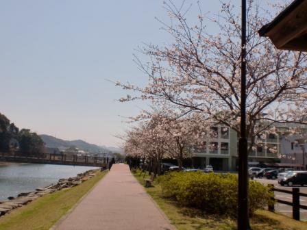 桜の景色 その2