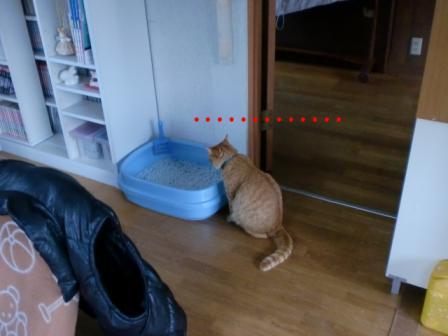 トイレの前で考える猫