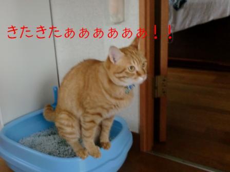 きたきたぁー!!