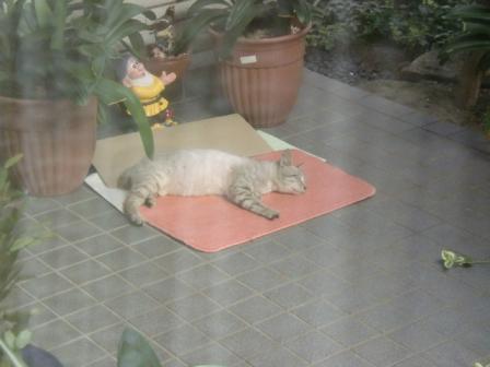 百円カーペットで寝るちょンび