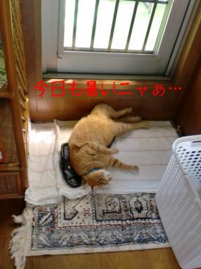 ダラケきった猫