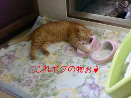 スリッパ抱く猫