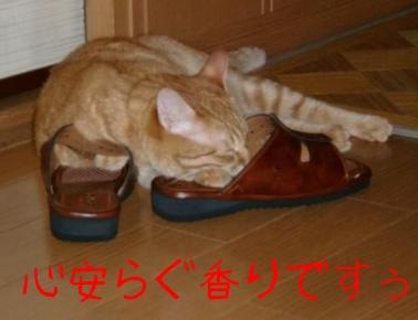 オヤジのスリッパも好きな猫