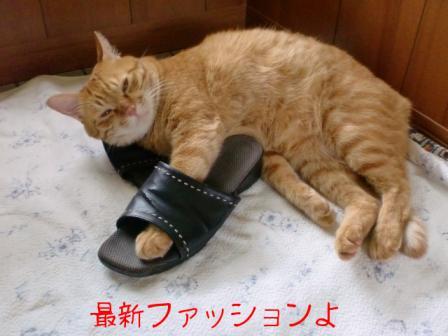 スリッパを履いた猫 1