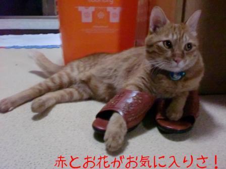 スリッパを履いた猫 2