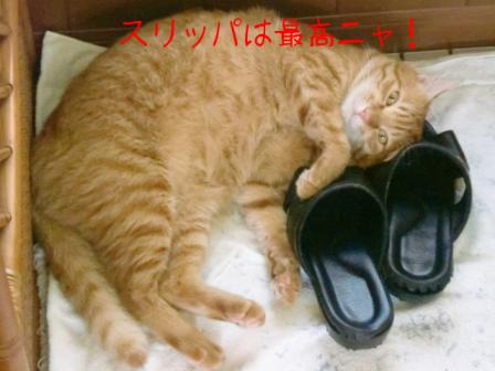 スリッパを枕にする猫