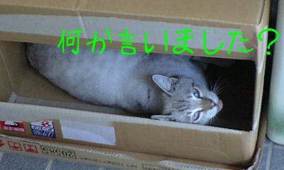 箱inちょンび